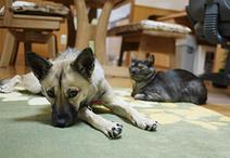 床暖房を設置したリビングでは、愛犬ココちゃんと愛猫クーちゃんが仲良くゴロン。...